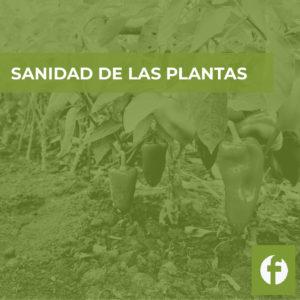Curso online sanidad de las plantas