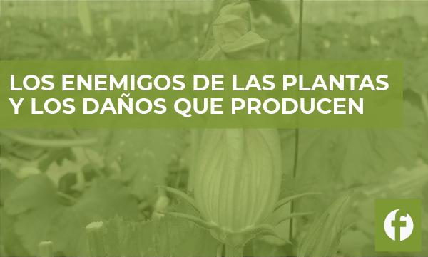 Curso online Los enemigos de las plantas y los daños que producen